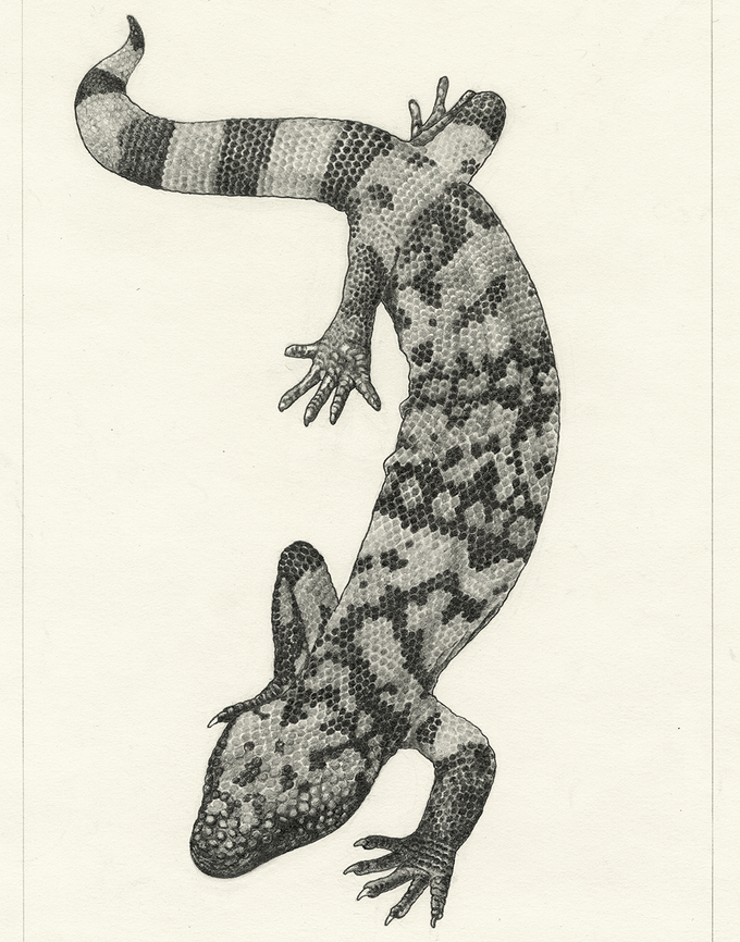 Image of Gila Monster