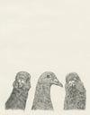 Pigeon Pals