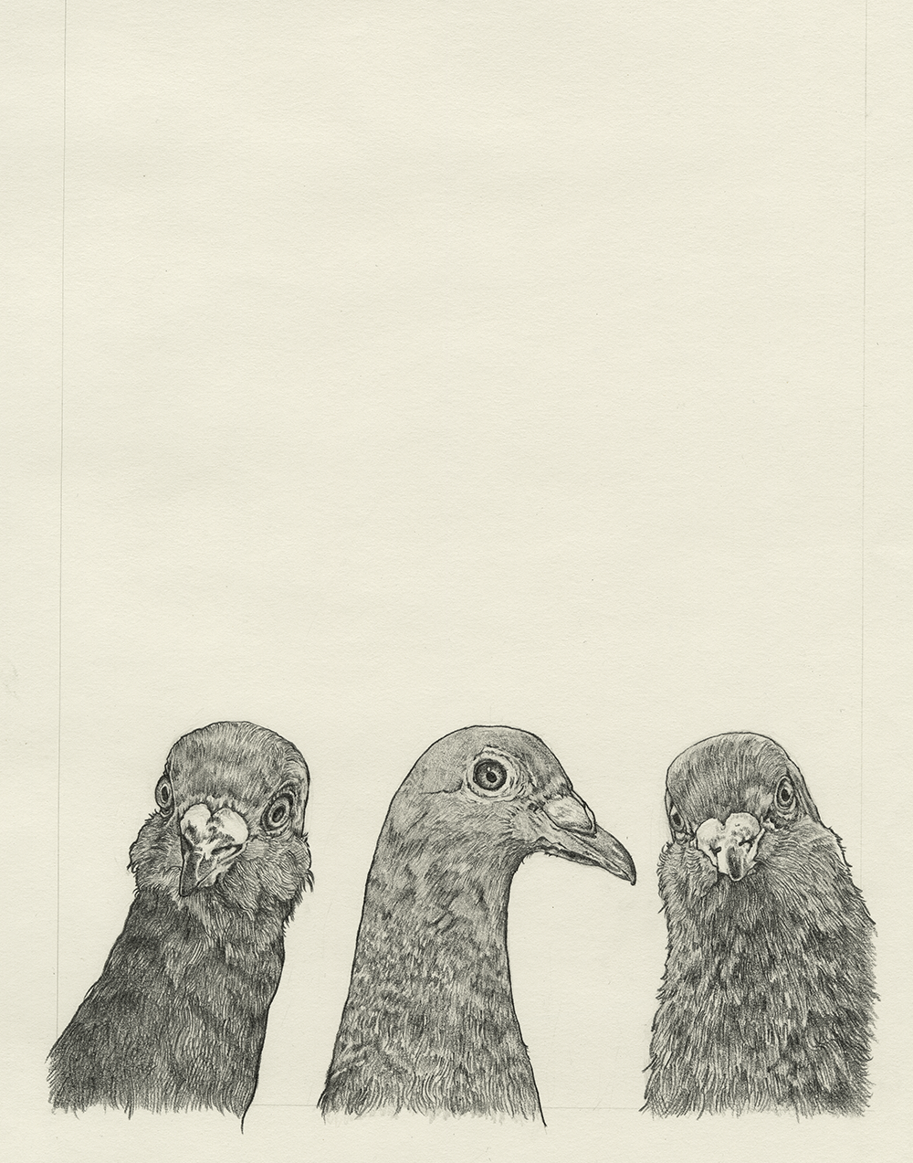 Image of Pigeon Pals
