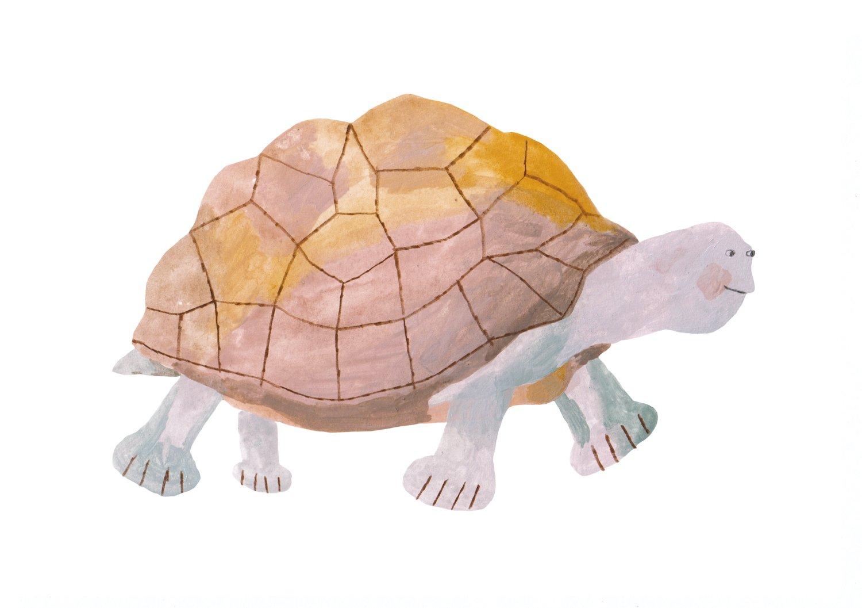 Image of Turtle II