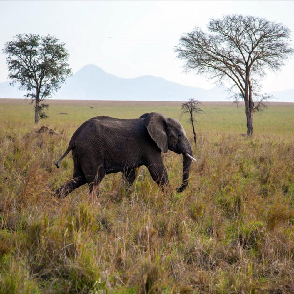Image of Uganda Bugisu