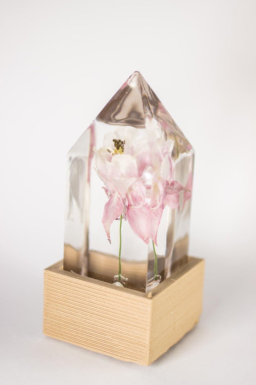Image of Columbine (Aquilegia vulgaris) - Floral Prism Light #3