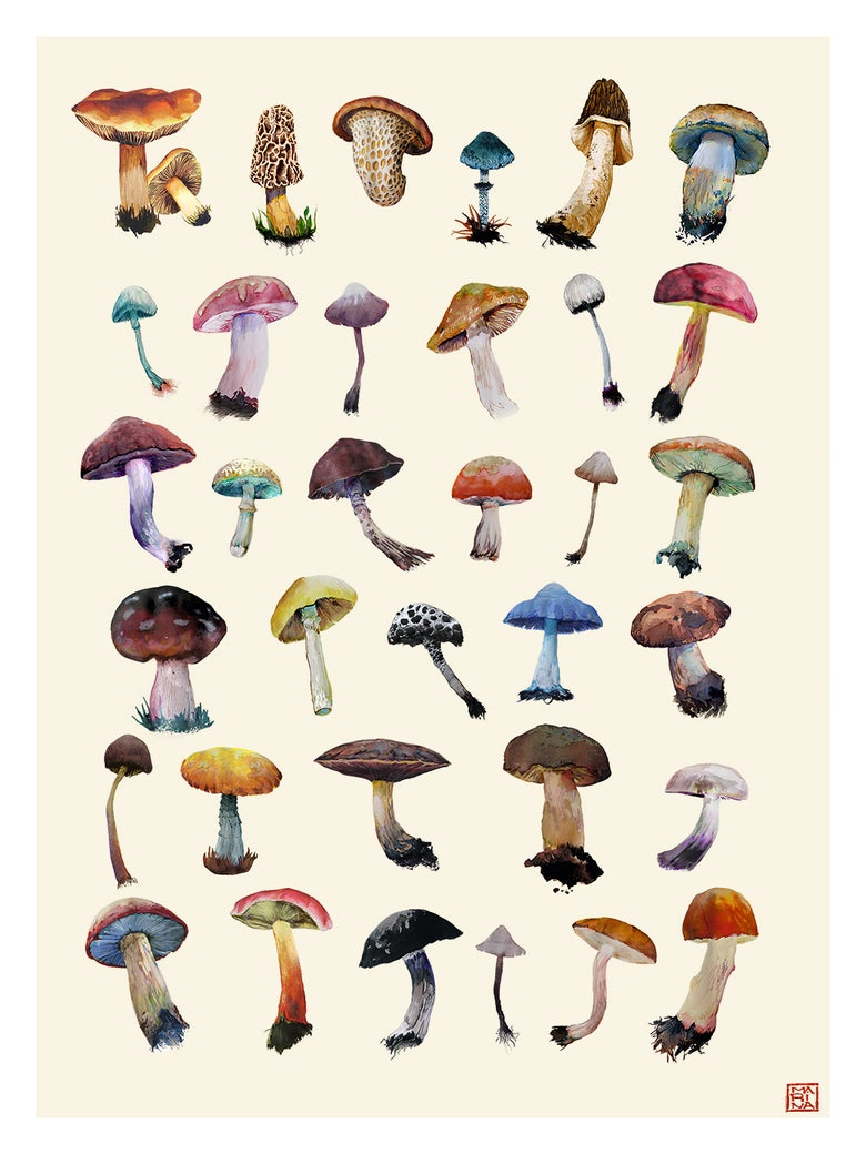 Image of My Mushroom Collection (Poster), By Marina Cochet