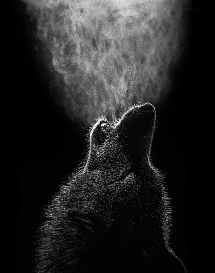 Image of Wolf's Howl