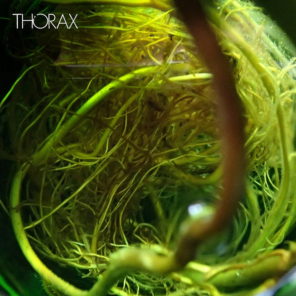 Image of Thoraxxx - Selftitled