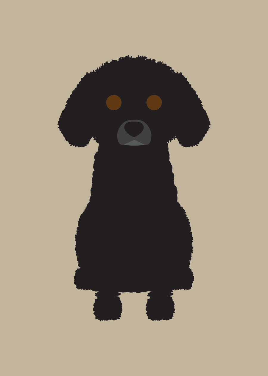 Toy Poodle  Collection