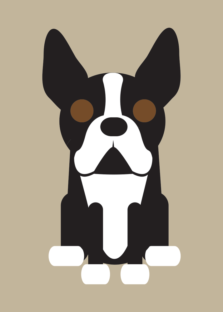 Image of Boston Terrier Collection