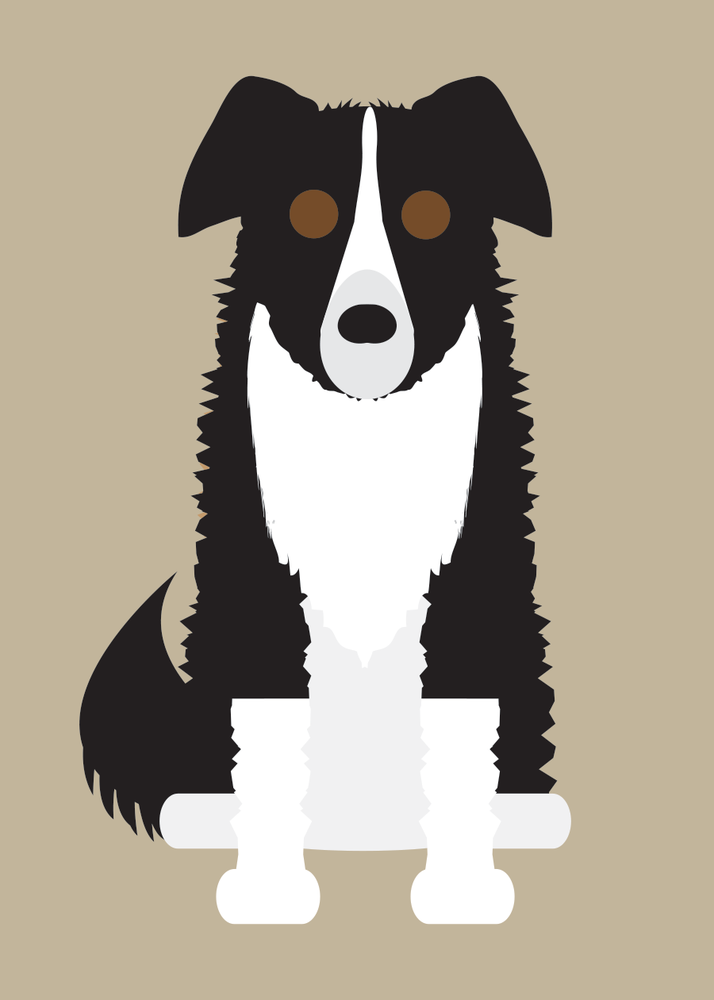 Image of Border Collie Collection