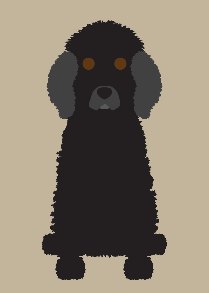 Image of Poodle (Standard) Collection
