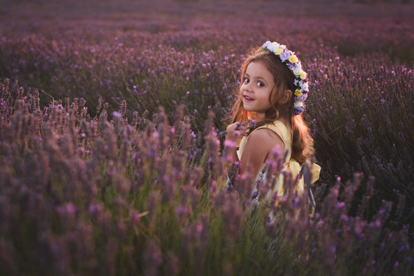 Image of Lavender evenings - Fri 17th July Hitchin