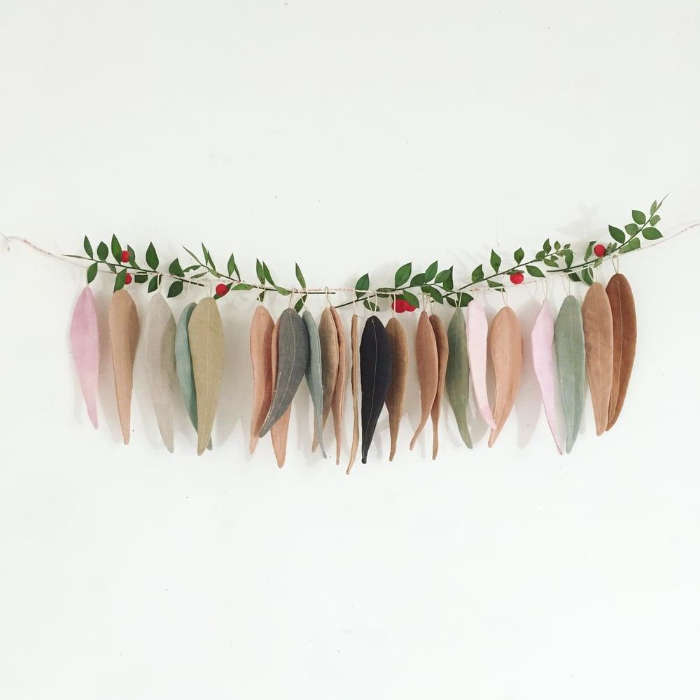 Image of cocon Eucalyptus