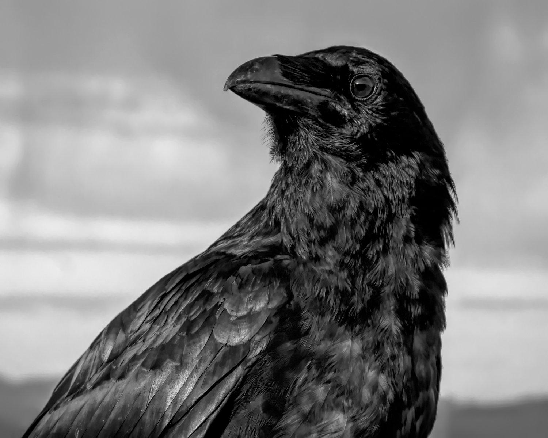 Image of Raven Magic