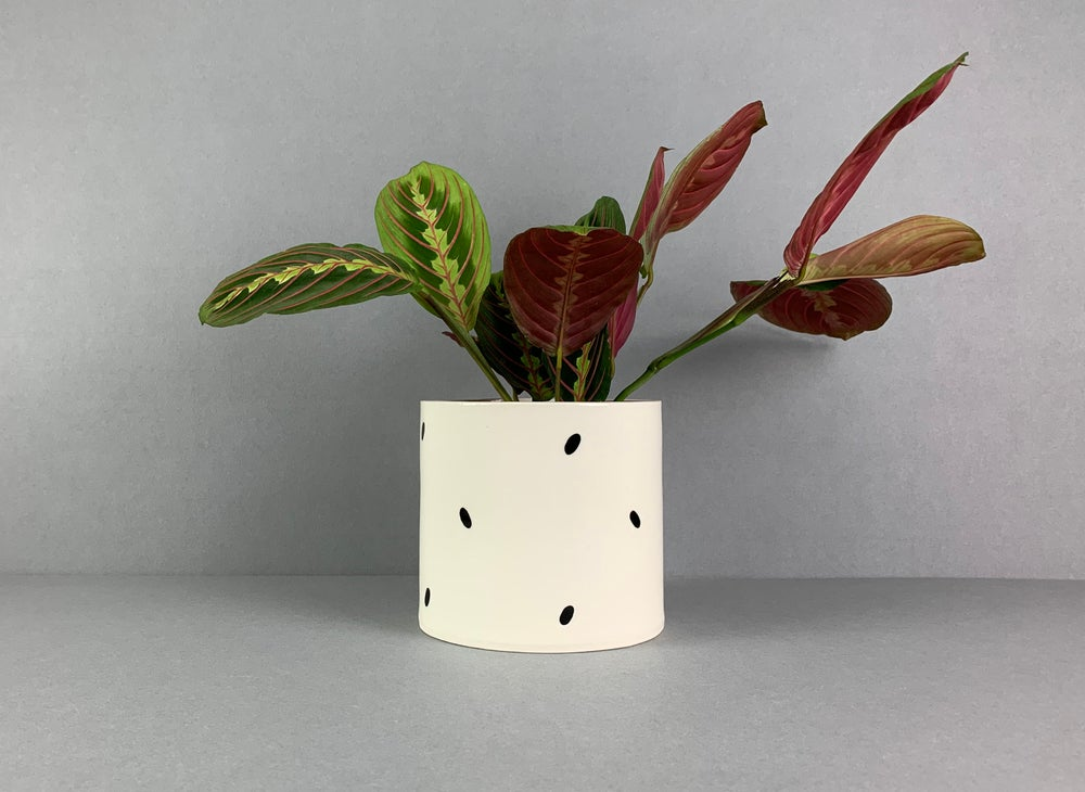 Image of Medium Shiny Dalmatian Plant Pot