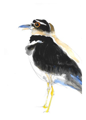 Image of Killdeer Killdeer