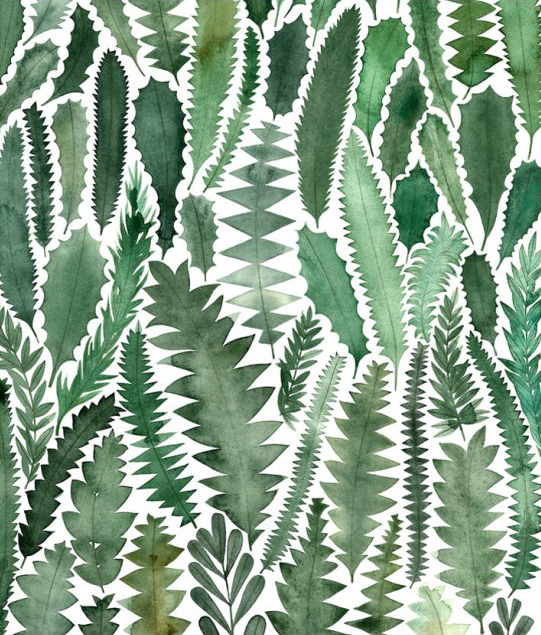 Image of Greeting Card - Banksia Leaves