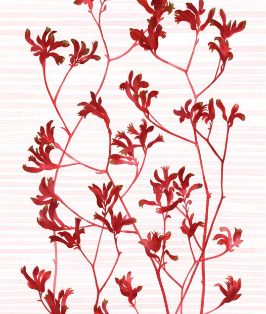 Image of Greeting Card - Kangaroo Paw