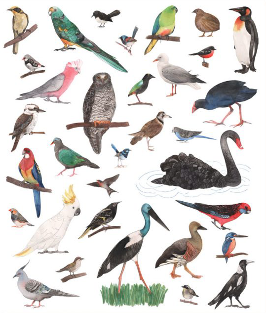 Image of Greeting Card - Birds of Australia