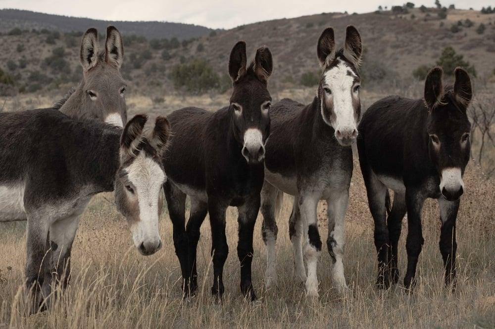 Image of Family Snapshot