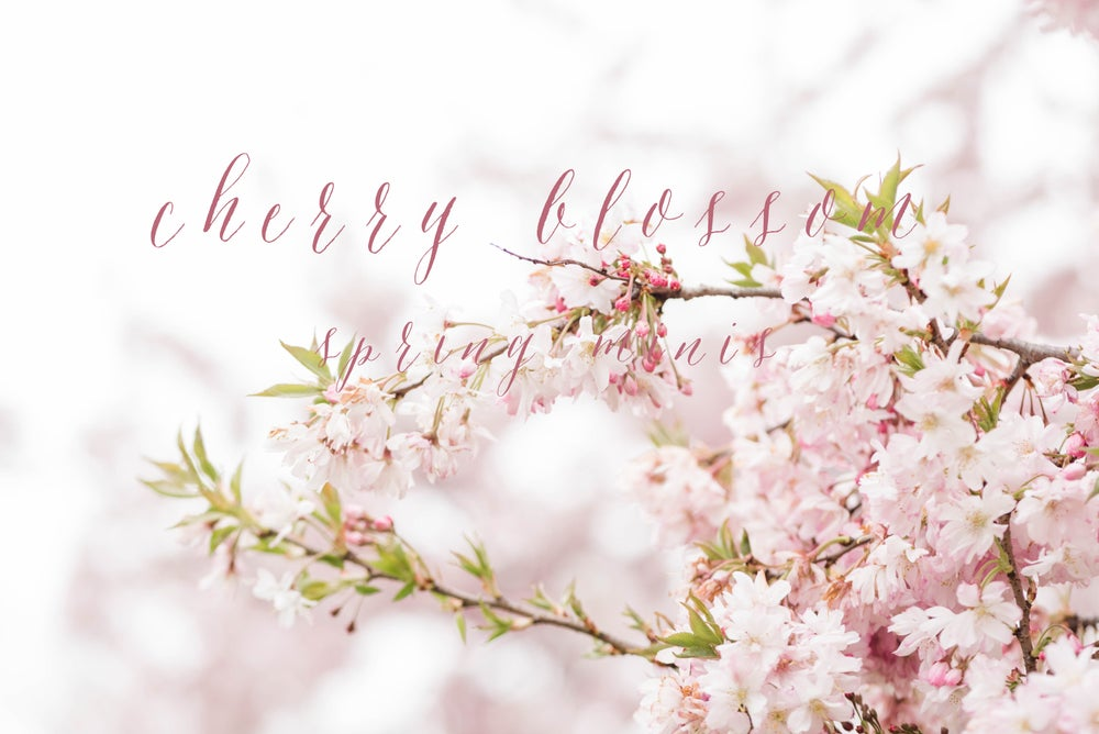 Image of Cherry Blossom Spring Mini Sessions