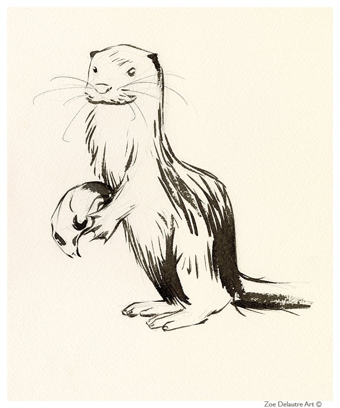 Image of Sea Otter Memento Mori
