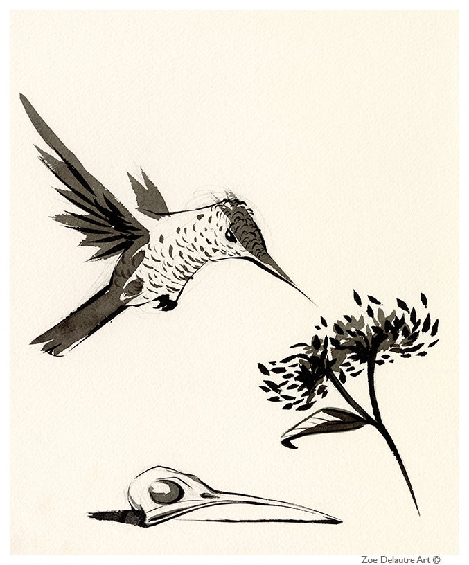 Image of Hummingbird Memento Mori