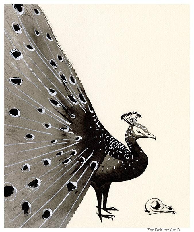 Image of Peacock Memento Mori