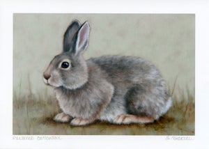"Image of ""Relaxed Cottontail"" Mini Art Print"