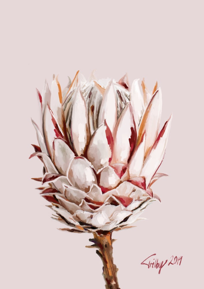 Image of Protea in Pinks