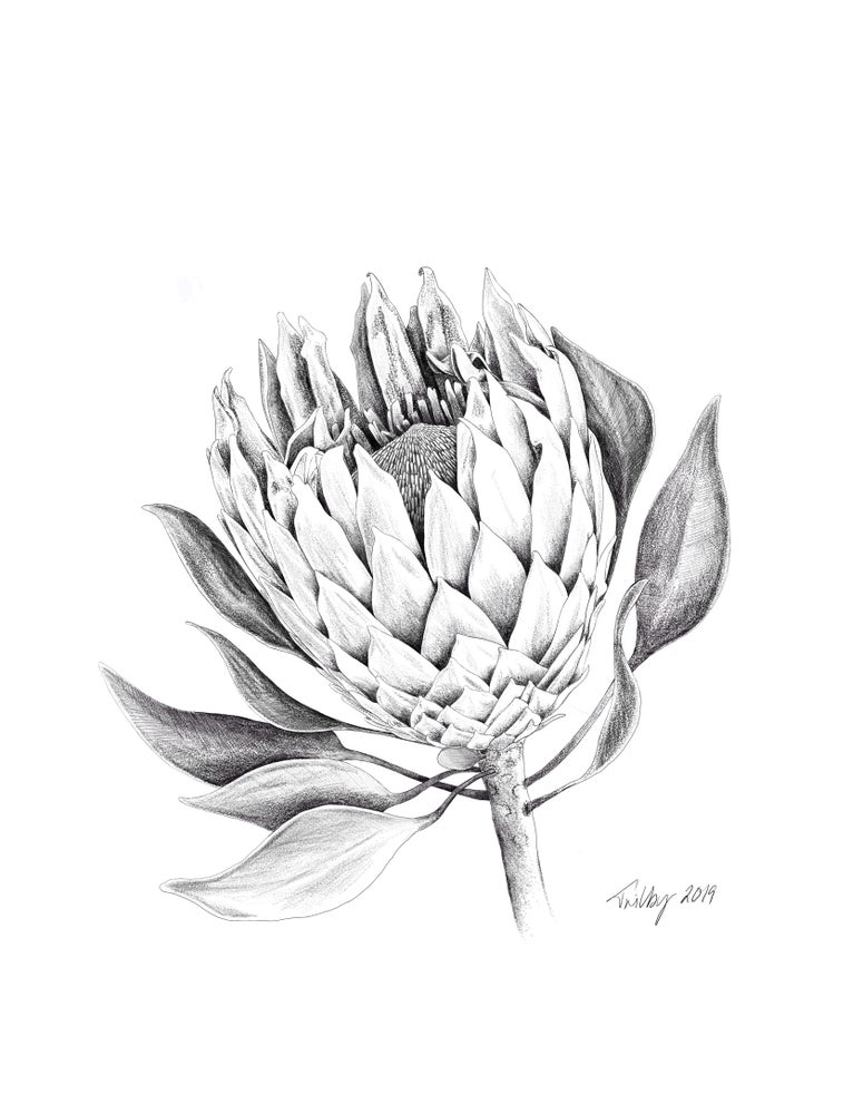 Image of Botanicals - King Protea