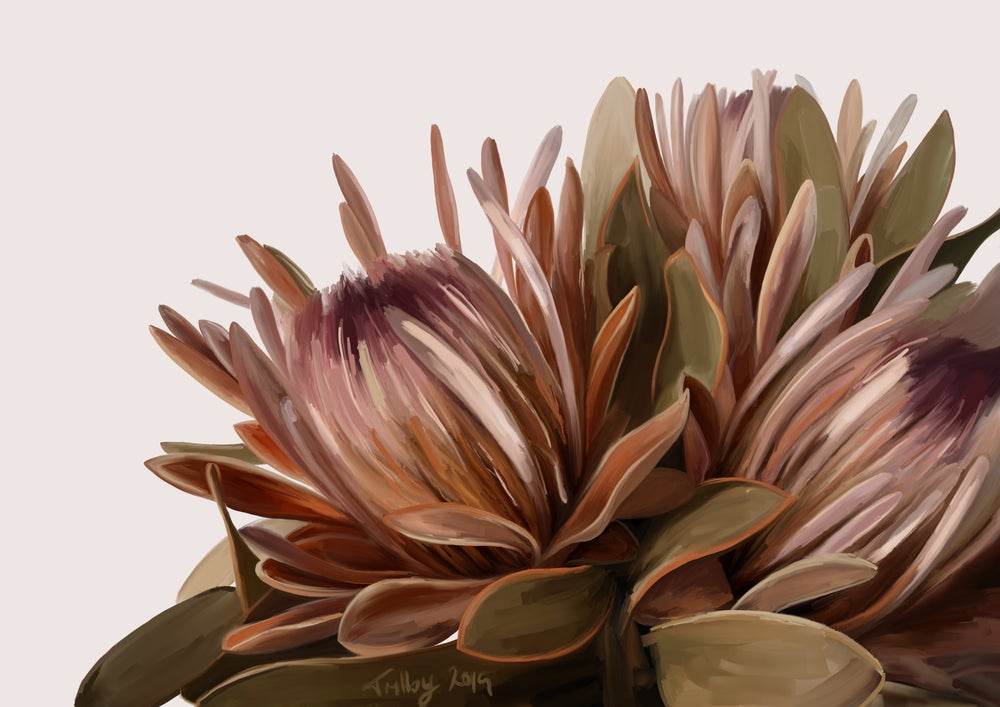 Image of Protea in Neutrals 2