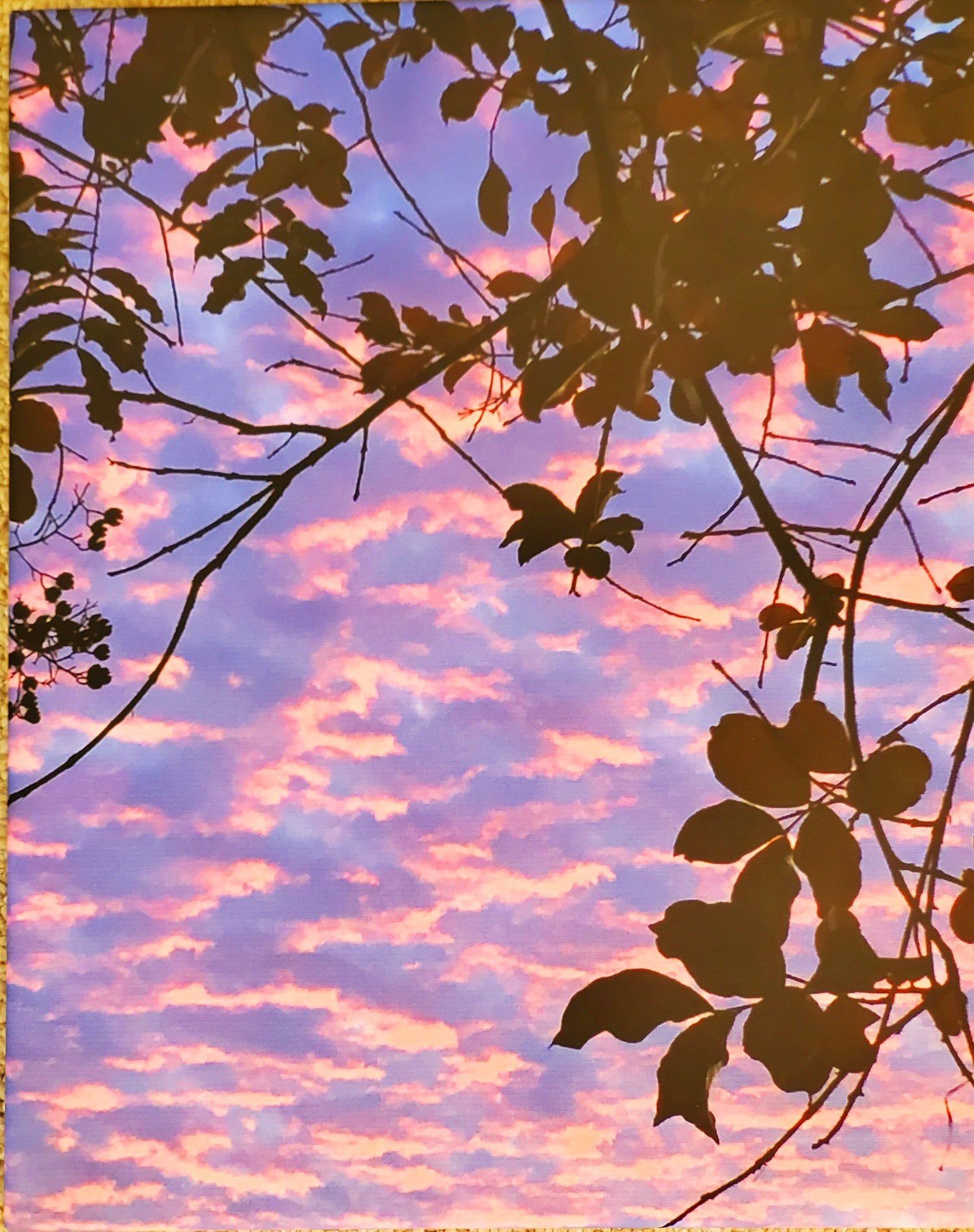 Image of Pink Sky - Gallery-wrapped Canvas Photograph