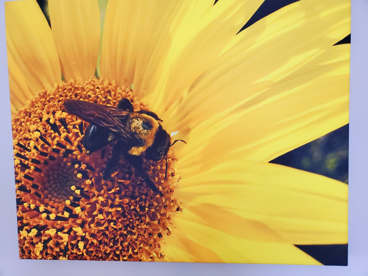 Image of Sunflower with Friend - Gallery-wrapped Canvas Photograph