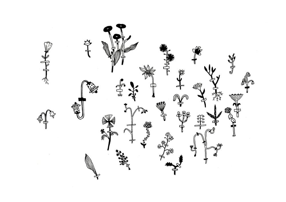 Image of Herbarium