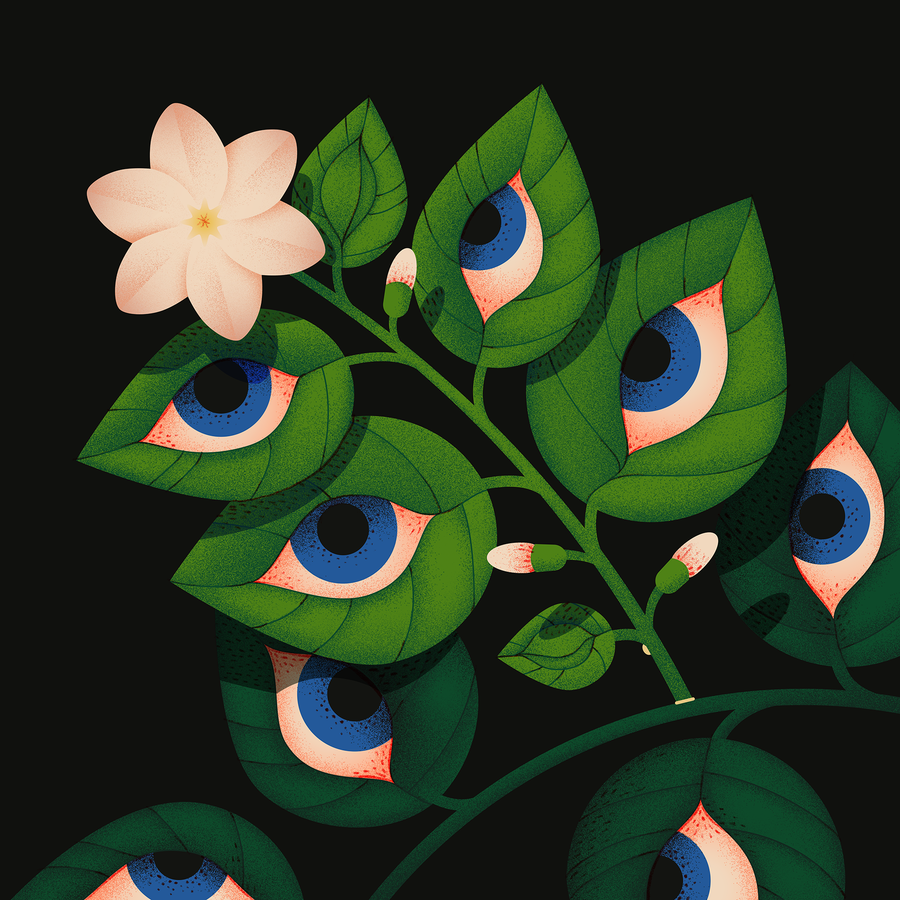 Image of Blooming eyes - Jasmine