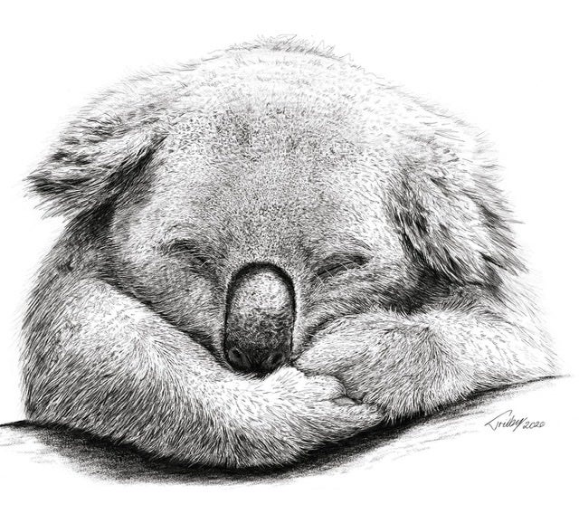 Image of Sleepy Koala Print