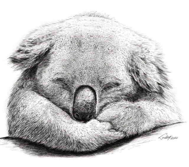 Image of A3 Sleepy Koala Print