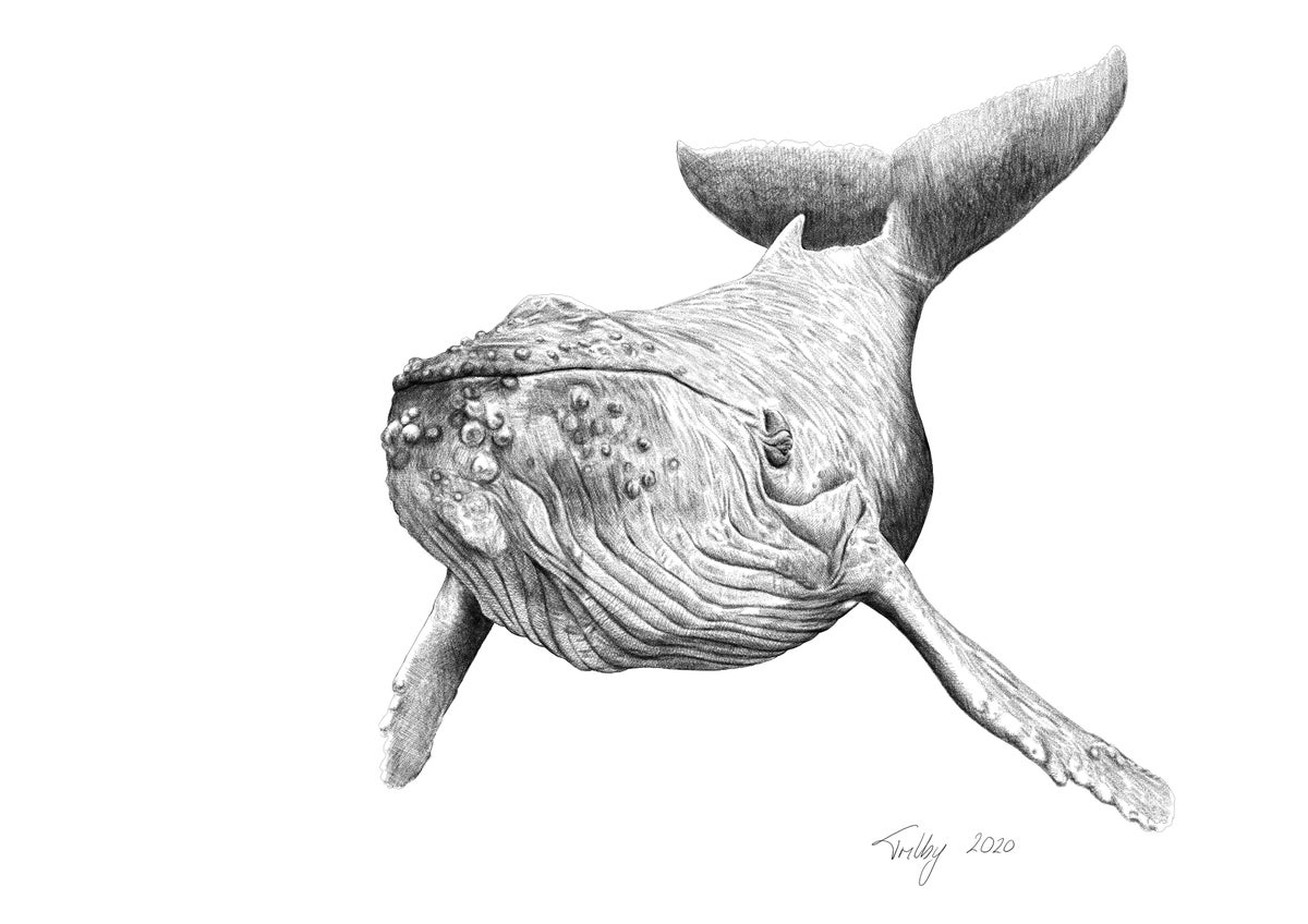 Image of Whale 1