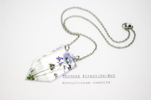 Image of Chinese Forget-Me-Not (Cynoglossum amabile) - Small #1