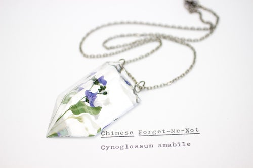 Image of Chinese Forget-Me-Not (Cynoglossum amabile) - Small #2