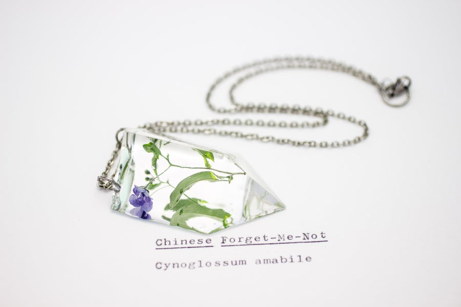 Image of Chinese Forget-Me-Not (Cynoglossum amabile) - Small #3