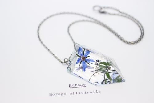 Image of Borage (Borago officinalis) - Small #1
