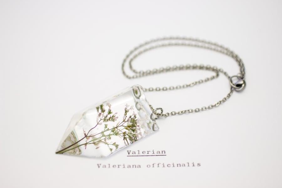 Image of Valerian (Valeriana officinalis) - Small #1