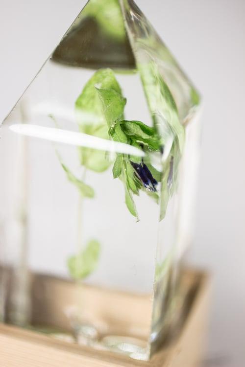 Image of Honeywort (Cerinthe major) - Floral Prism Light #1