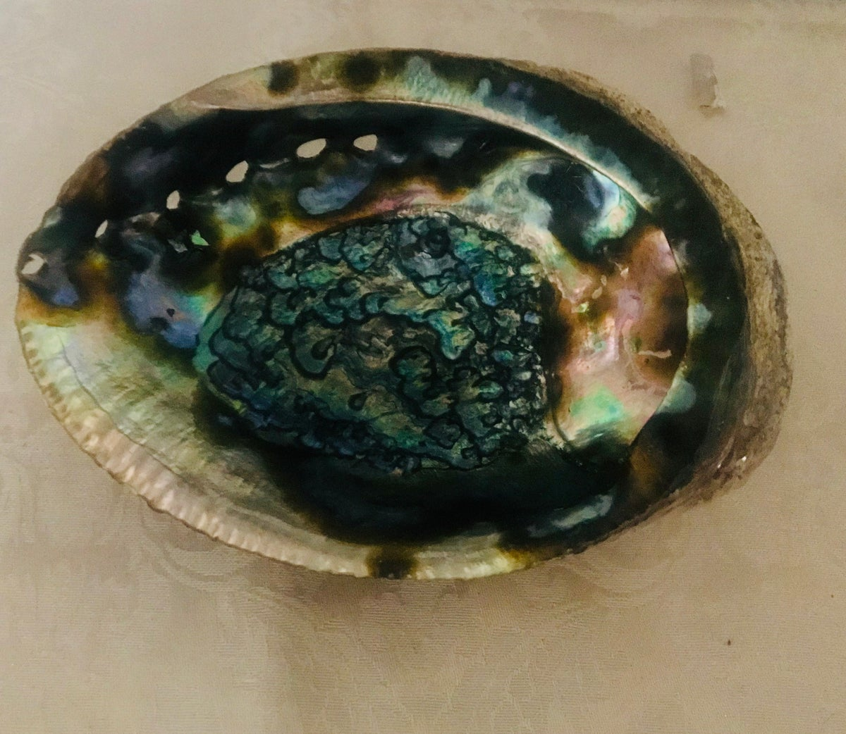 Image of Abalone Shell