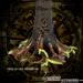 Image of Tree of Life Menorah