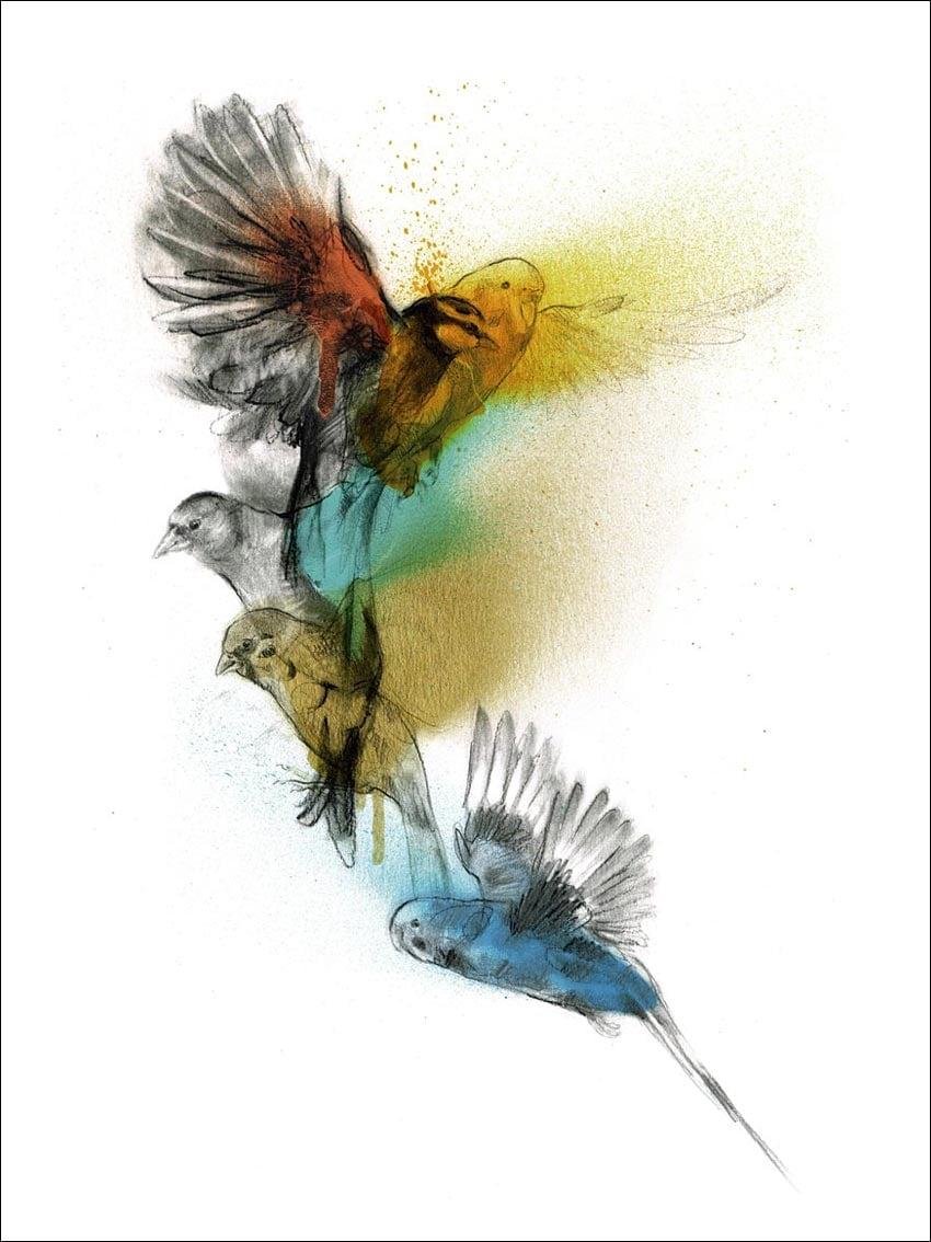 Birds Line