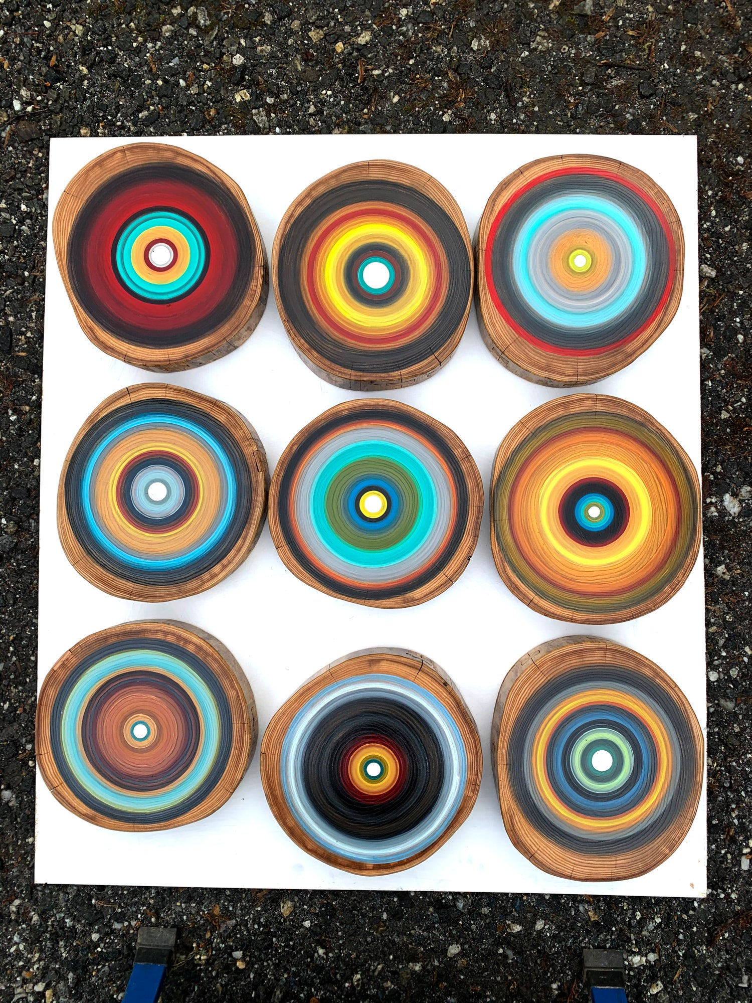 Image of 12 Large Tree Ring Paintings Wall Art made of Red Elm Wood