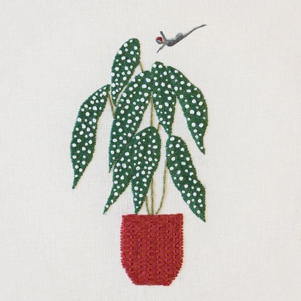 Image of Bastidor Begonia Maculata