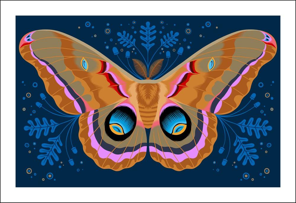 Image of Polyphemus Moth Print