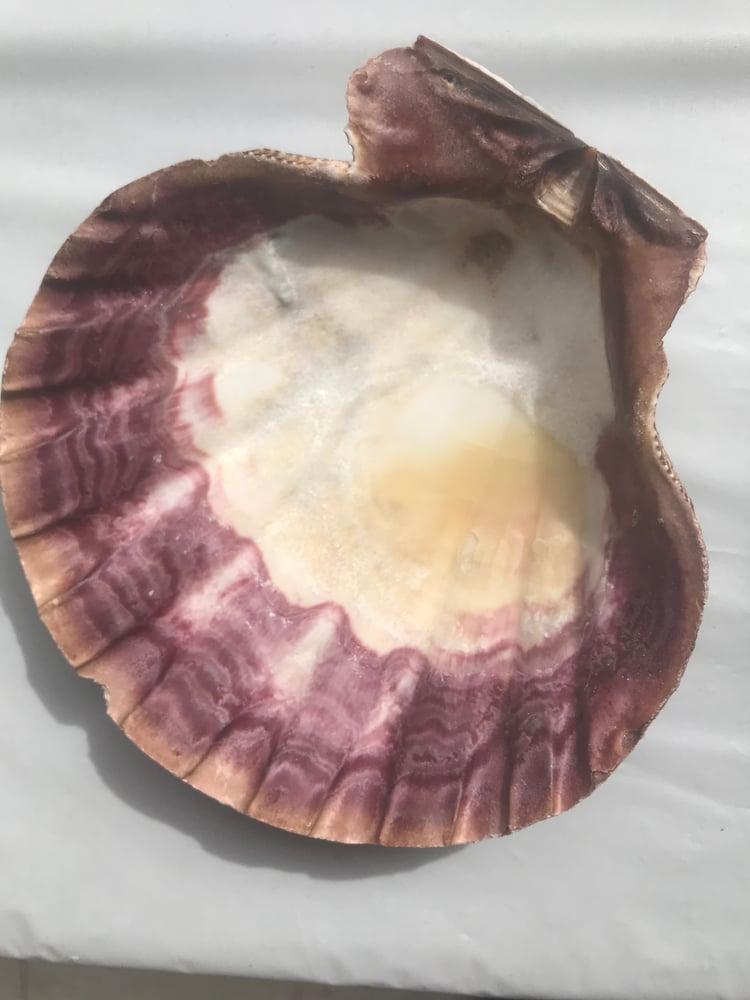 Image of Abalone Shell